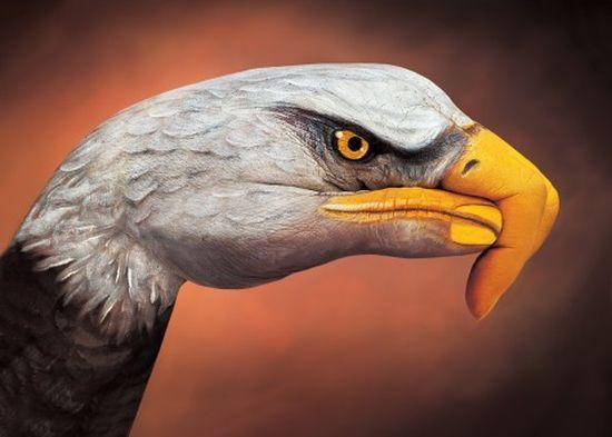 Guido Daniele - Eagle