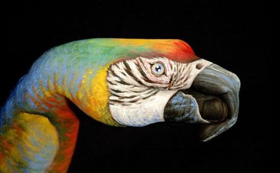 Guido Daniele - Parrot