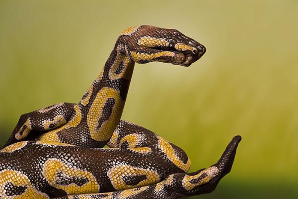 Guido Daniele - Snake