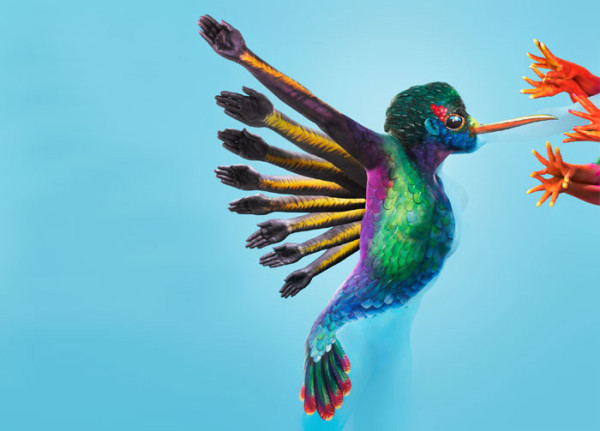 Kate Spinks Dean - Hummingbird